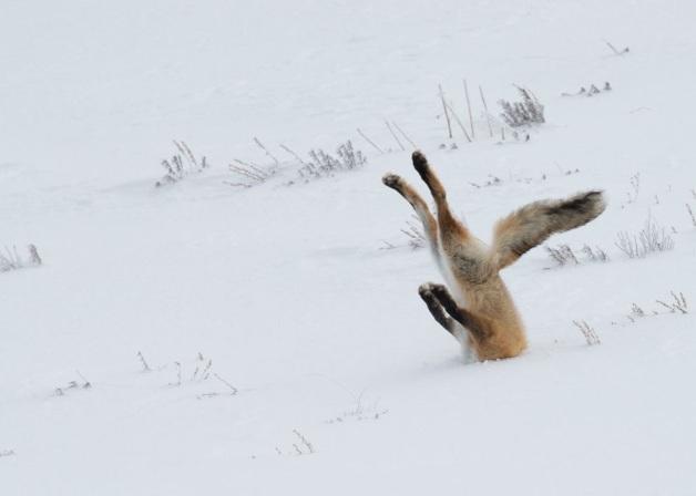 comedy-wildlife_14